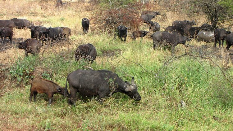 Serengeti Select Safaris