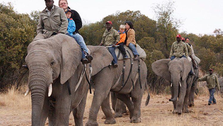Tanzania Outfitter & Safaris