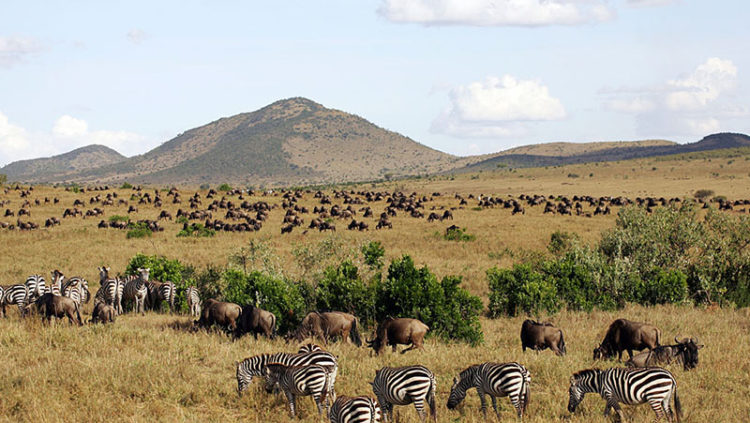 Babji Tours & Safaris Ltd