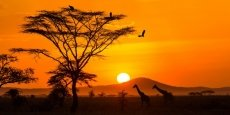 PARADIES SAFARIS LTD